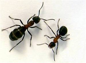 People and writers are not ants. We have different genres for a reason.