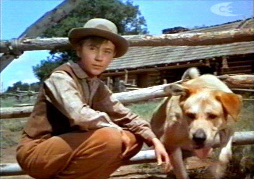 "Old Yeller is a story drawn from a classic idea of ""boy meets girl."""